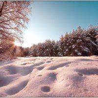Зима в разгаре :: Андрей Грибов