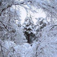 Зимний лес :: Lara