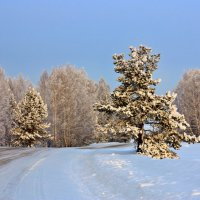 По зимнику :: Виктор Ковчин