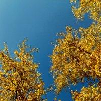 осень :: Екатерина Иванченко