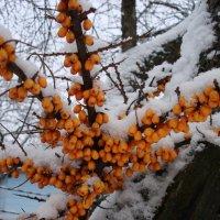 золото-снежное :: boris kantor