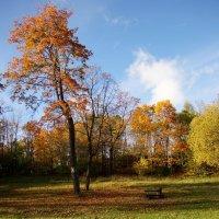 Осень в Можайском. :: Валерия заноска