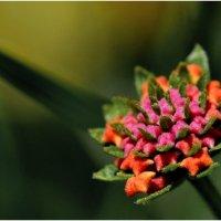 Egypt flower :: Антон Богданов