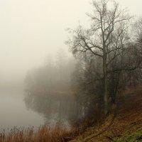 Туман :: Александр Китранин