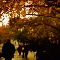 самая холодная осень :: Daria Secret
