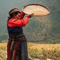 Harvest time :: Artem Zhushman