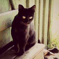 Деревенская кошка :: Ирина Шендрик