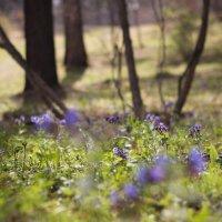Когда Весна в лесу :: Юлия Вяткина