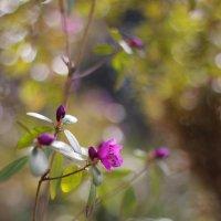 Когда Весна :: Юлия Вяткина
