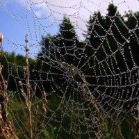 россным  утром      -паутинка  в жемчугах!! :: Александр Есликов