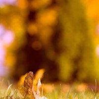Осенние нотки :: Аня Форинко