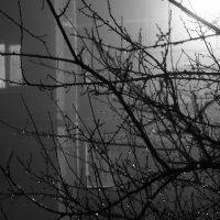 Туман :: Дарья Блохина