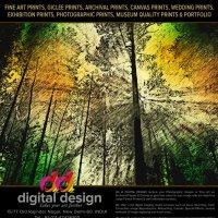 Forest :: Manish Manuja