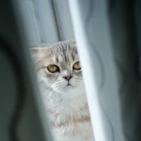 кошка Букля :: Ксения Буко