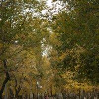 Осень :: Влад Белов