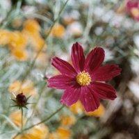 Flower :: Anastasia GangLiON