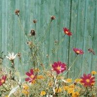 Flowers :: Anastasia GangLiON