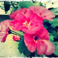 Цветок :: Maria Sulima