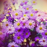Летние цветы :: Alex Droozuk