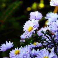 Цветы Сентября... :: Дмитрий Скубаков
