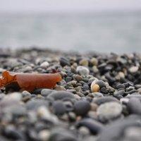Осень на море :: Надежда Донских