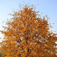 осень в Борисово :: Надежда Донских