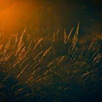Золотое свечение... :: Лана Григорьева