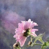 цвет в окне :: Foxi-Foxi 24