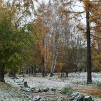 первый снег 2012г. :: Владимир Попов