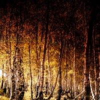в осеннем лесу, мужик грибы собирал :: Артем Otlyakov