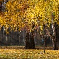 Осенний пейзаж :: Денис Веселов