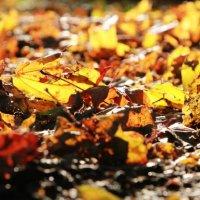 Осень :: Елена Родионова