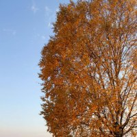 Осенний парк :: Ксения Беляева