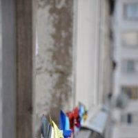 вертушки :: Надежда Донских