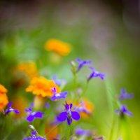 Цветы :: Ekaterina Chichkova