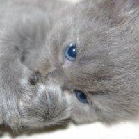 котята :: Виктория Кудь
