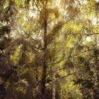 Сказочный лес :: Ольга Нерубенко