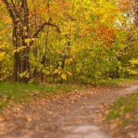 Золотая осень :: Дмитрий Николаев