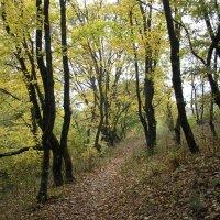 Осень в лесу. :: Жанна Савкина