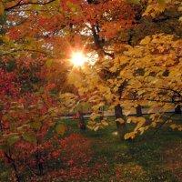 Солнце, жёлтые листья....... :: Софья Закроева