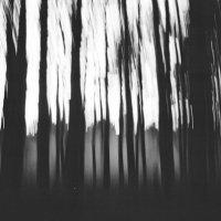Лес для ведьмы-1 :: Наташа Барова