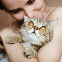 Кошечки :: Наташа Барова