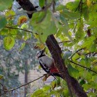 Woodpecker :: Mary Skylight