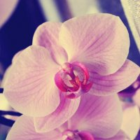 Орхидея :: Денис Аюкасов
