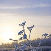 Замерзшая :: Татьяна Кибус