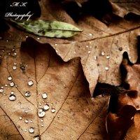 Осень :: Максим Королькевич