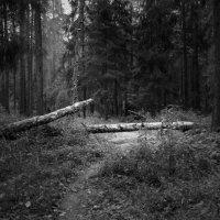 Проход закрыт :: Сергей Веегрес