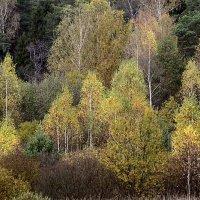Осенний лес :: Сергей Скуратов