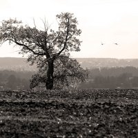 Графический пейзаж :: Сергей Скуратов