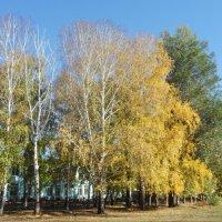 осень :: тамара антошкина